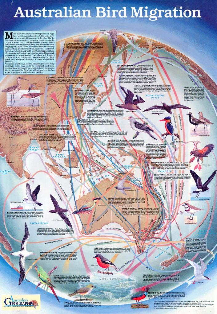 australian_geographic_birds_poster
