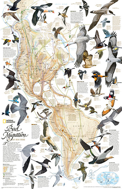 bird-migration-map