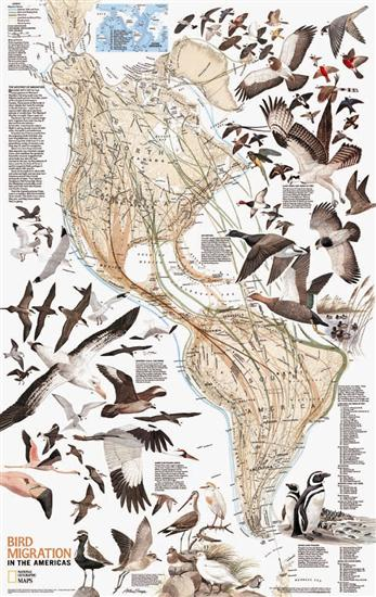 lrg_bird_migration_map.57d92ba