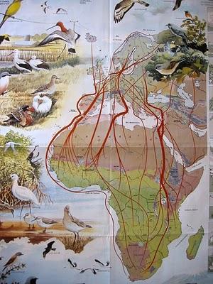 mapa_migracion