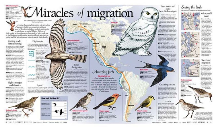 miracles of migration